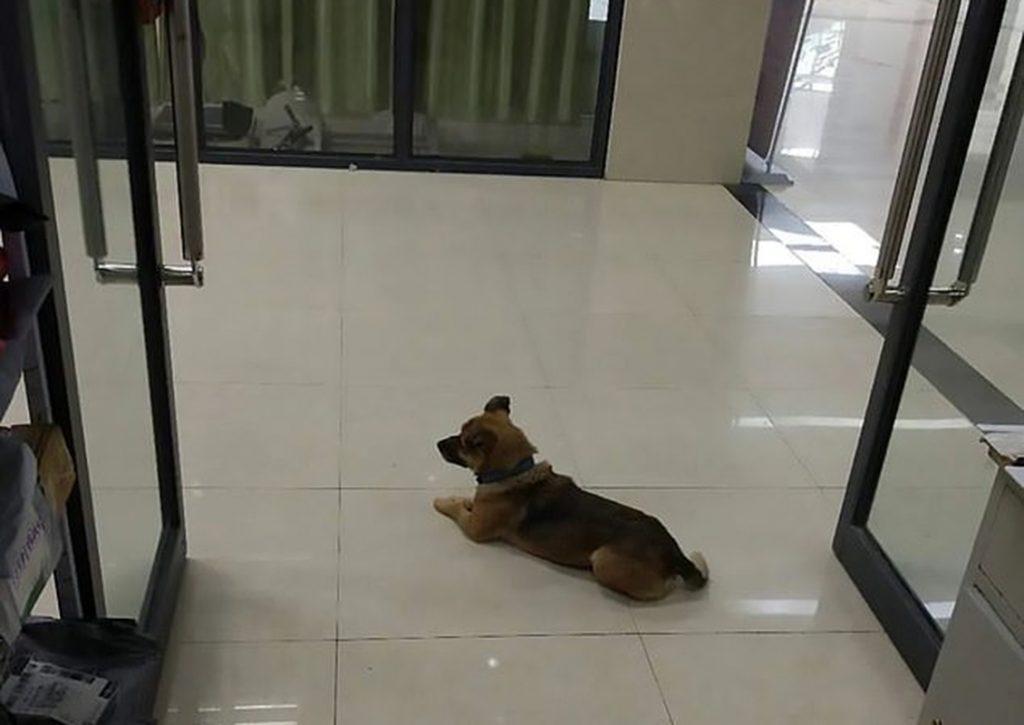 La historia del perro que lleva tres meses en un hospital esperando a su dueño fallecido por COVID-19