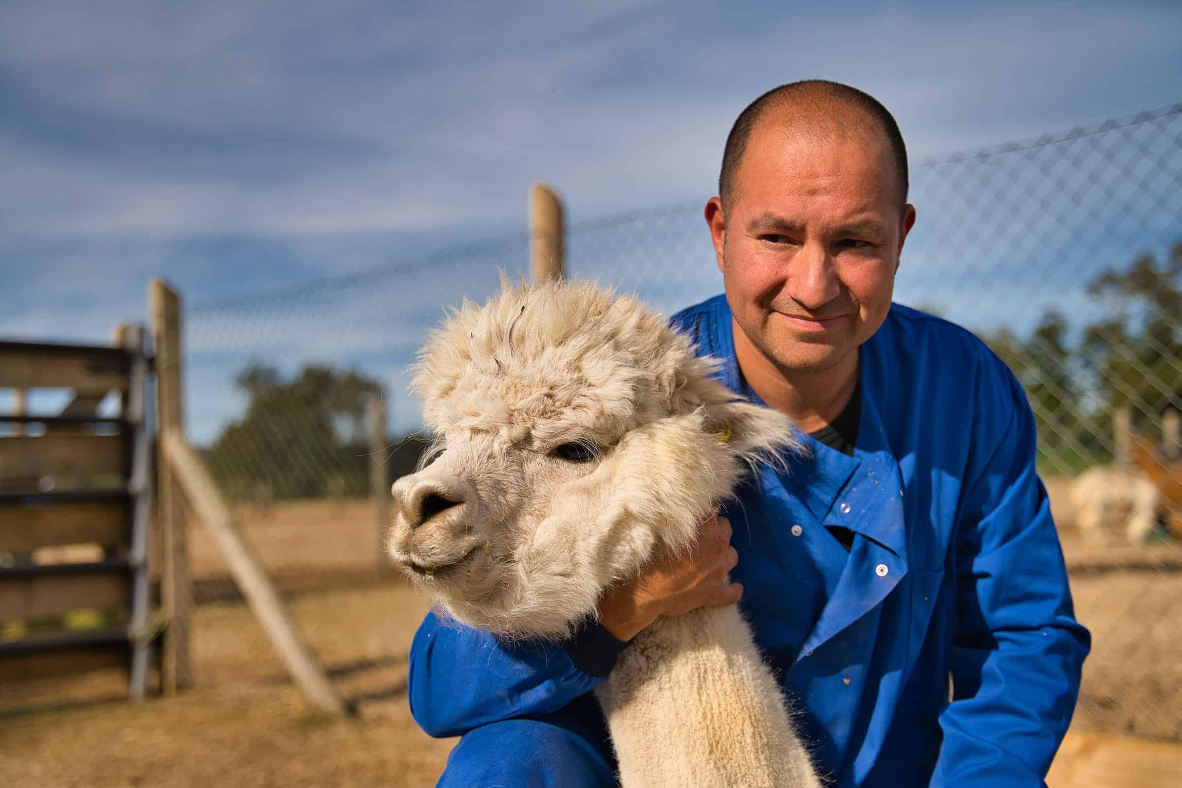 El investagor de la UACh, Alejandro Rojas, nos explicó por qué las alpacas podrían salvarnos del coronavirus