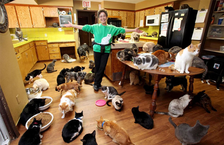 En Reino Unido promueven la compañía de gatos para la soledad en cuarentena