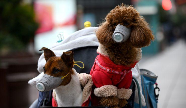 Igual que los dueños: La presidenta del Colmevet nos habló de los cambios de conducta de las mascotas en la pandemia