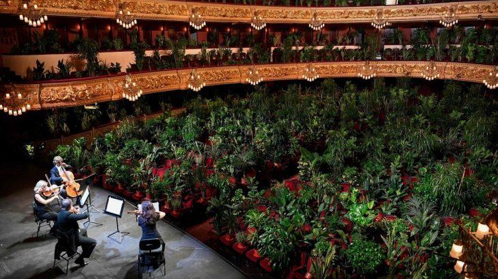 Regresaron los conciertos en Barcelona… con plantas como público