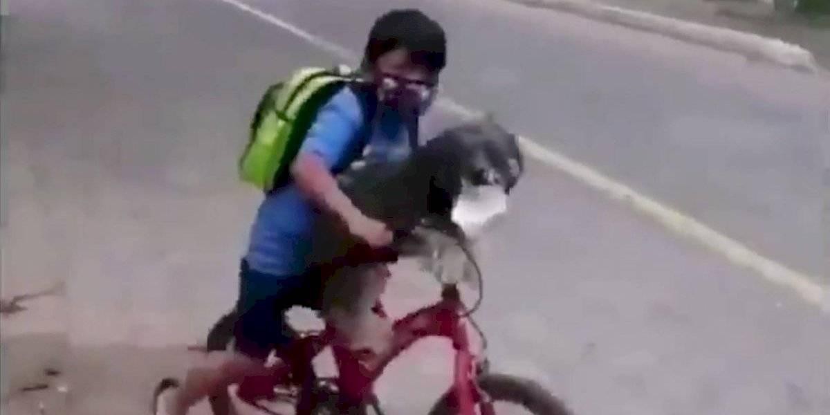 Niño le puso mascarilla a su perro y desató un tsunami de ternura en las redes sociales