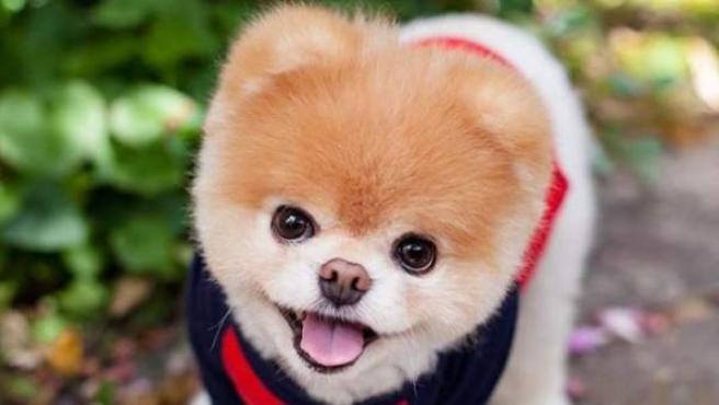 ¡Feliz Día del Perro! Acá algunos de los perros más famosos del mundo