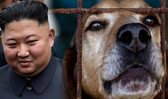 Kim Jong Un prohibió la tenencia de perros en Corea del Norte y ordenó entregarlos o sacrificarlos